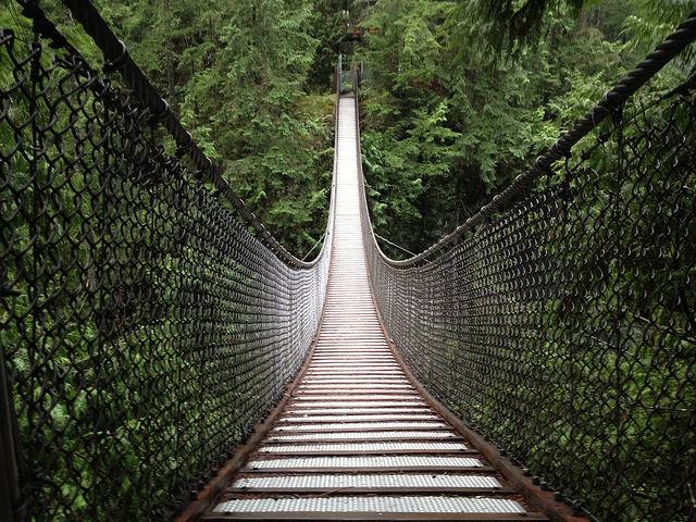Nice wood bridge in the jungle.
